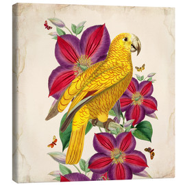Tableau sur toile  Oh My Parrot V - Mandy Reinmuth