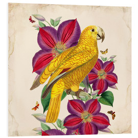 Tableau en PVC  Oh My Parrot V - Mandy Reinmuth
