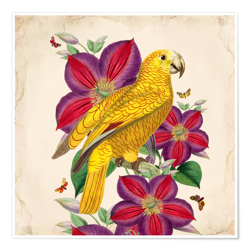 Poster Oh My Parrot V