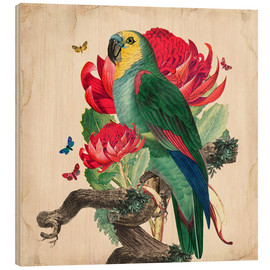 Bois  Oh My Parrot X - Mandy Reinmuth