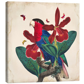 Tableau sur toile  Oh My Parrot VII - Mandy Reinmuth