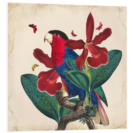 Tableau en PVC  Oh My Parrot VII - Mandy Reinmuth