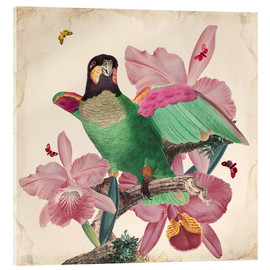 Verre acrylique  Oh My Parrot VIII - Mandy Reinmuth