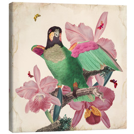 Toile  Oh My Parrot VIII - Mandy Reinmuth