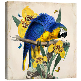Toile  Oh My Parrot IX - Mandy Reinmuth