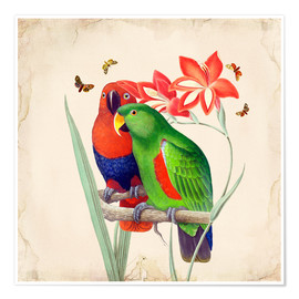 Poster  Oh My Parrot I - Mandy Reinmuth