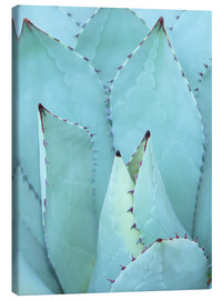 Toile  agave