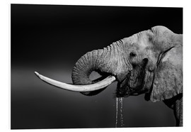 Tableau en PVC  Elephant bull with huge tusks - Johan Swanepoel