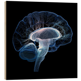Bois  Human Brain illustrated with network of nerves - Johan Swanepoel