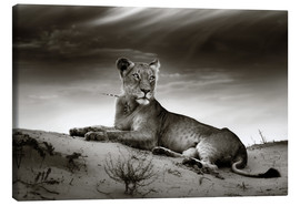 Tableau sur toile  Lioness resting on top of a sand dune - Johan Swanepoel