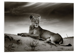 Tableau en PVC  Lioness resting on top of a sand dune - Johan Swanepoel