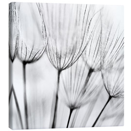 Toile  black and white dandelion