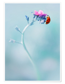 Poster  Ladybug on forget me not flower - Jaroslaw Blaminsky