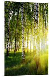 Verre acrylique  Birches flooded with light