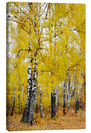 Toile  Birches in motion