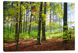 Toile  Autumn forest early in the morning sunlight