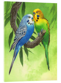 Tableau en verre acrylique  25917 Budgies on Green Background - John Francis