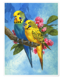 Poster  25916 Budgies on Blue Background - John Francis