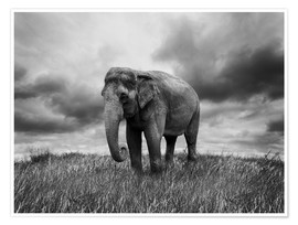 Poster Elephant standing in the grass