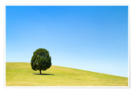 Poster Lonely tree on a green meadow