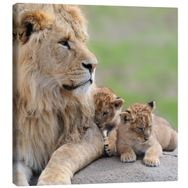 Toile  Young lions