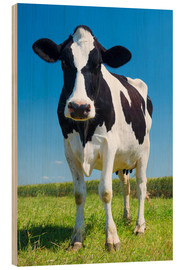 Bois  Cow - Black and White