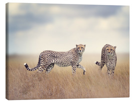 Toile  Cheetahs on the hunt