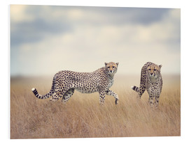 Forex  Cheetahs on the hunt