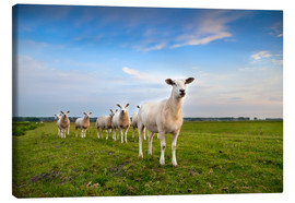 Tableau sur toile  Sheep on the dike