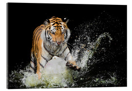 Verre acrylique  Tiger Makes the water