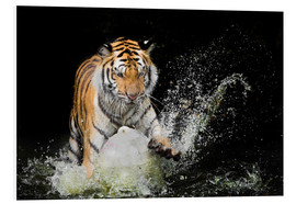 Tiger Makes the water