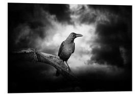 Forex  Raven in the moonlight