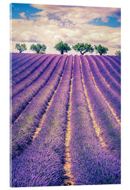 Verre acrylique  Lavender field with trees in Provence, France
