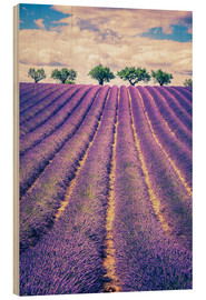 Bois  Lavender field with trees in Provence, France