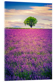 Verre acrylique  Lavender field with tree in Provence, France