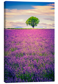Tableau sur toile  Lavender field with tree in Provence, France