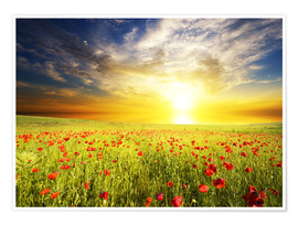 Poster  Field with green grass and red poppies