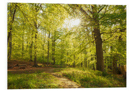 Forex  Spring forest with sunshine - Oliver Henze