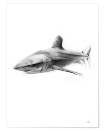 Poster  Requin I - Alexis Marcou