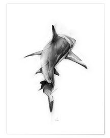 Poster  Requin II - Alexis Marcou
