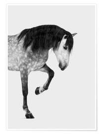 Poster Grand cheval