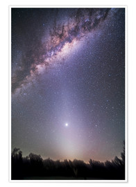 Poster  Venus in zodiacal light. - Alan Dyer