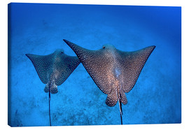 Toile  Spotted eagle rays - Ethan Daniels