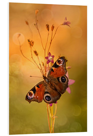 Tableau en PVC  Peacock butterfly on bell flowers - Jaroslaw Blaminsky