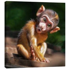 Tableau sur toile  Baby Monkey - Photoplace Creative
