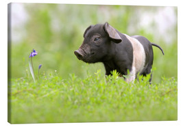 Tableau sur toile  Little Baby Pig - WildlifePhotography
