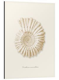 Tableau en aluminium  Ammonite spirale - Patruschka
