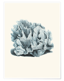 Poster Corail gris