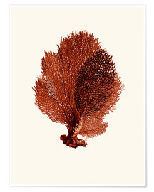 Poster Corail rouge