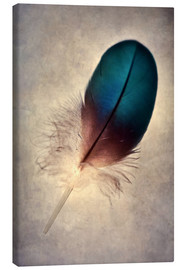Toile  Blue parrot feather - Jaroslaw Blaminsky